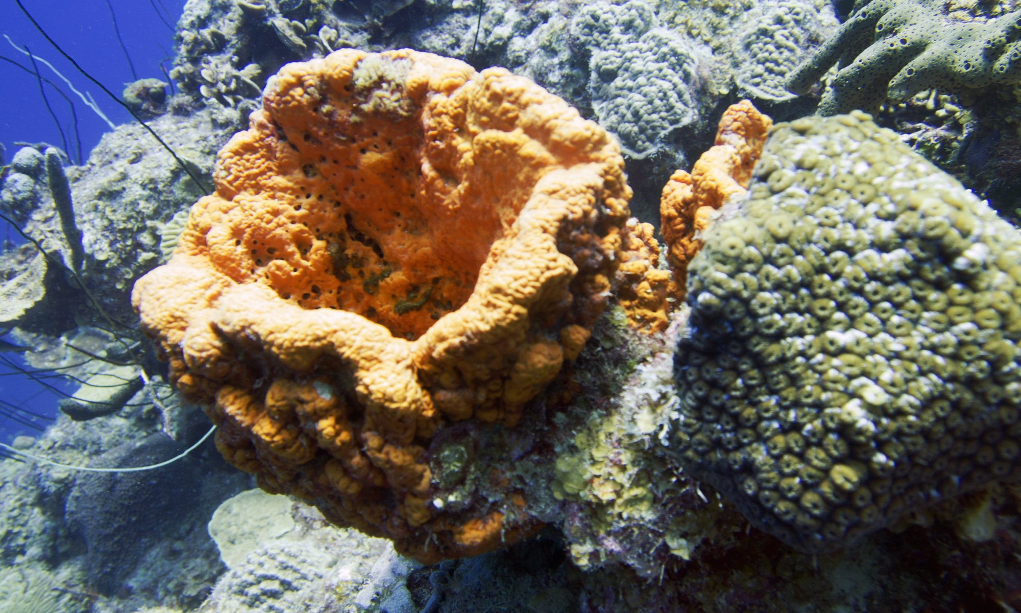 Underwater Coral Curacao